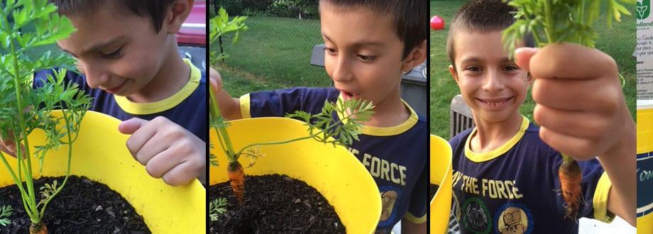 Lettuce-Grow-Header
